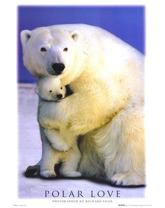 polar-love-bears